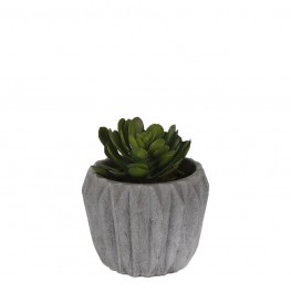 Geometric Potted Succulent