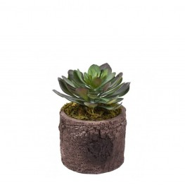 Rustic Potted Succulent
