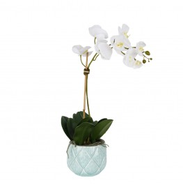 Stella Orchid Arrangement-Small-White
