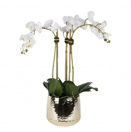 Parisian Orchid Arrangement-Medium White