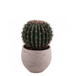 Potted Barrel Cactus-Small