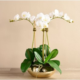 Chic Orchid Arrangement- Small-White