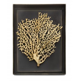 FAN CORAL SHADOW BOX