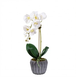Modern Orchid Arrangement- Small