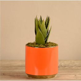 Orange Potted Aloe- Small