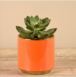 Potted Succulent-Orange