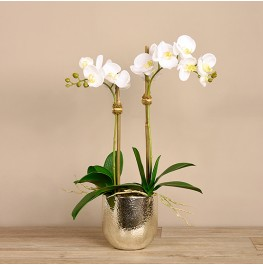White Orchid Arrangement- Small